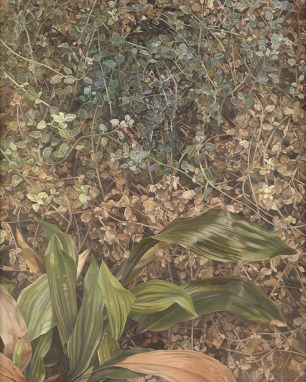 two plants by Lucian Freud